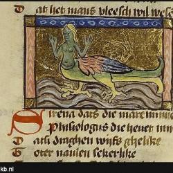 Сирена-русалка. Иллюстрация из бестиария Национальной Нидерландской библиотеки