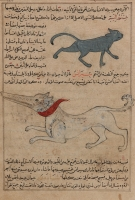 """Сиранис (внизу). Иллюстрация к трактату Аль-Казвини """"Чудеса создания и чудеса существ и странных существующих вещей"""""""