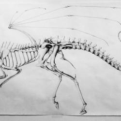 Вариант реконструкции скелета химеры (карандашный эскиз)