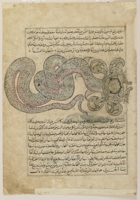 """Змей-дракон аль-Таннин. Иллюстрация к трактату Аль-Казвини """"Чудеса создания и чудеса существ и странных существующих вещей"""""""