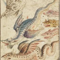 Амфиптерий. Рисунок второй половины XVI века